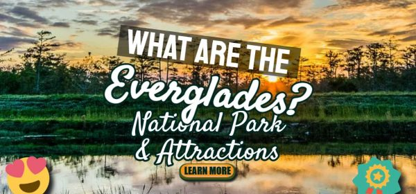 What Are the Everglades?